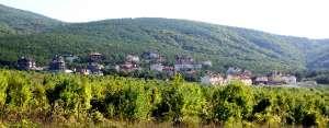 Коттеджный поселок «Кедровая роща». Общий вид